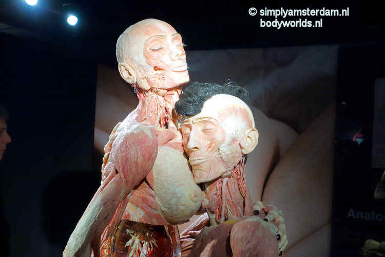 Body Worlds, the Happiness Project