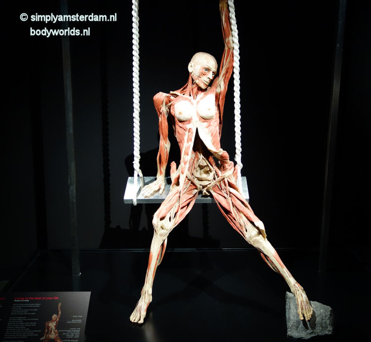 Lady on a swing (Body Worlds, the Happiness Project)