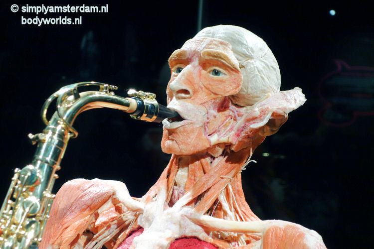 Body Worlds new attraction in Amsterdam