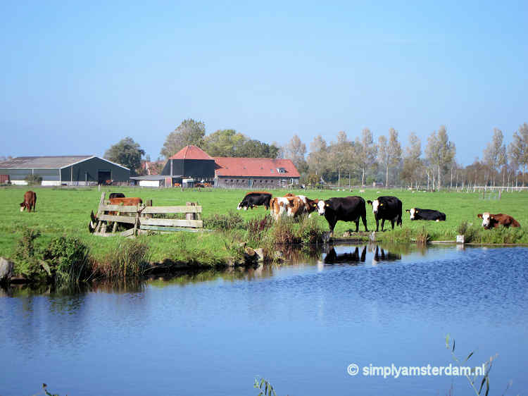 Rural North Amsterdam